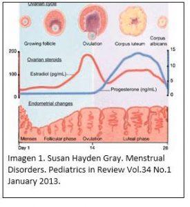 Ciclo menstrual. Afectos de la regla en la nutrición y el deporte
